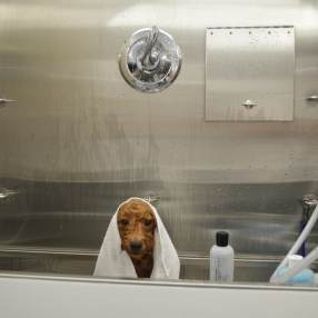 Dog-Grooming-Teagan-Tub-2
