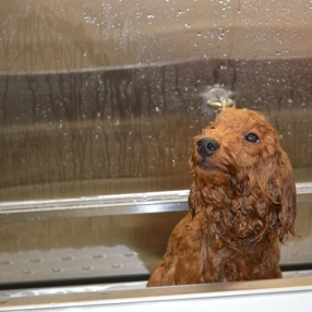 Dog-Grooming-Teagan-Tub-3
