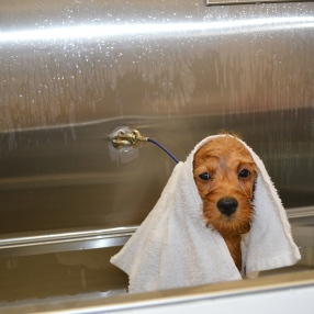 Dog-Grooming-Teagan-Tub