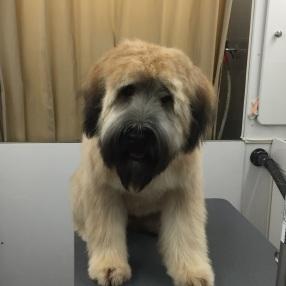 dog-grooming-westlake