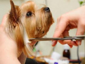 pet-grooming-southlake