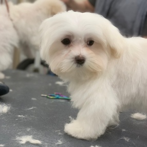 Mobile-Dog-Grooming-Roanoke-1